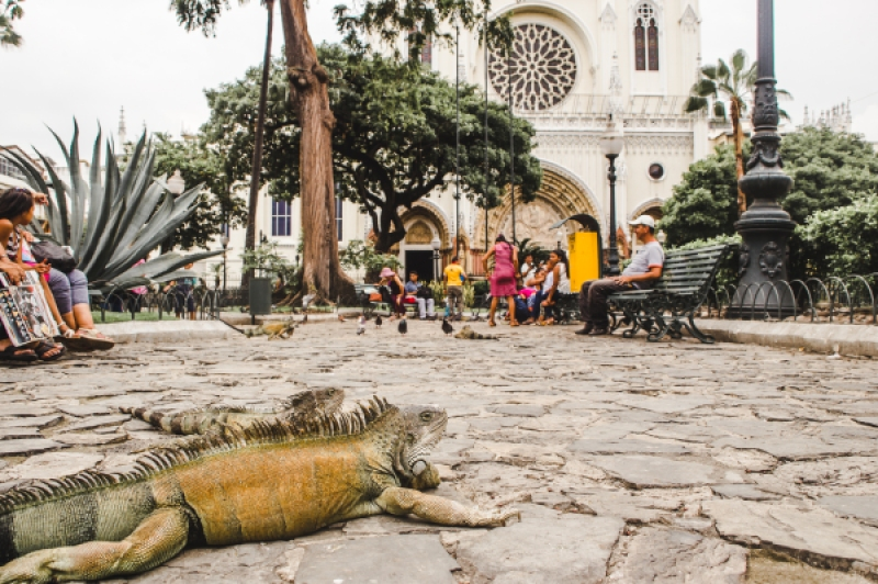 Top tips for before you travel to Ecuador