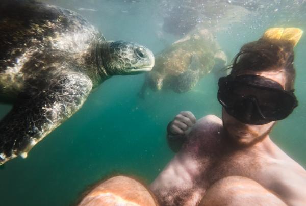 mancora peru turtles swimming